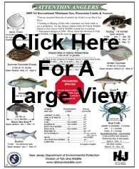 Ny fishing report saltwater fishing regulations for New jersey saltwater fishing regulations